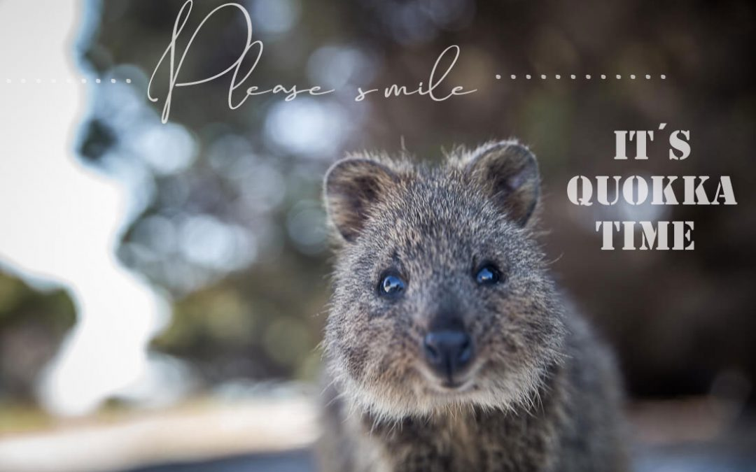 Rottnest Island – Please smile! It´s Quokka time