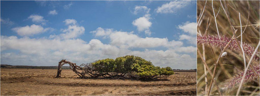 Leaning Tree in Australien
