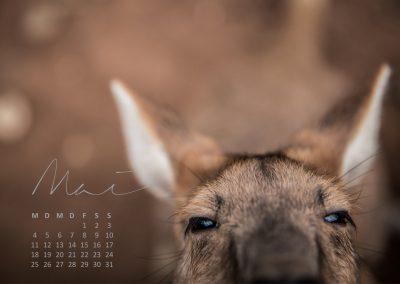 Australien Kalender Mai