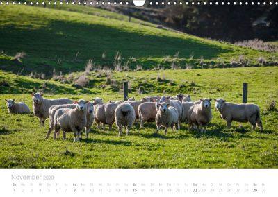 Neuseeland Kalender November