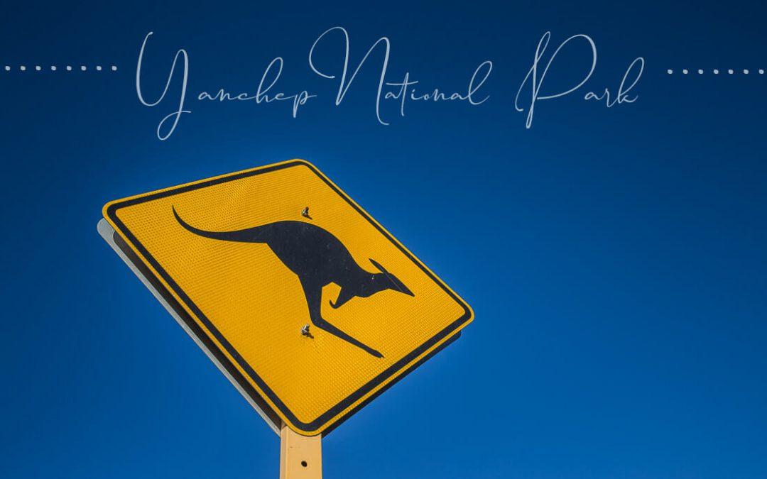 Yanchep National-Park und Koalas