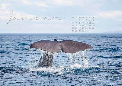 Kalender Neuseeland Monat Januar