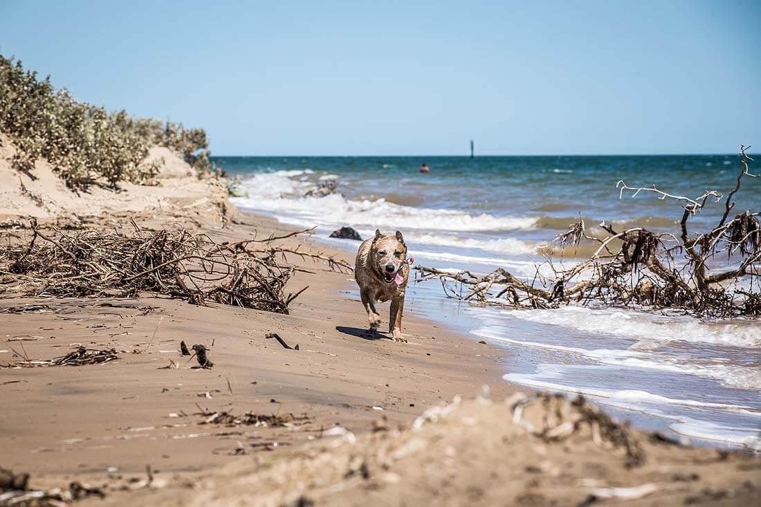 laufender Hund am Strand von Australien