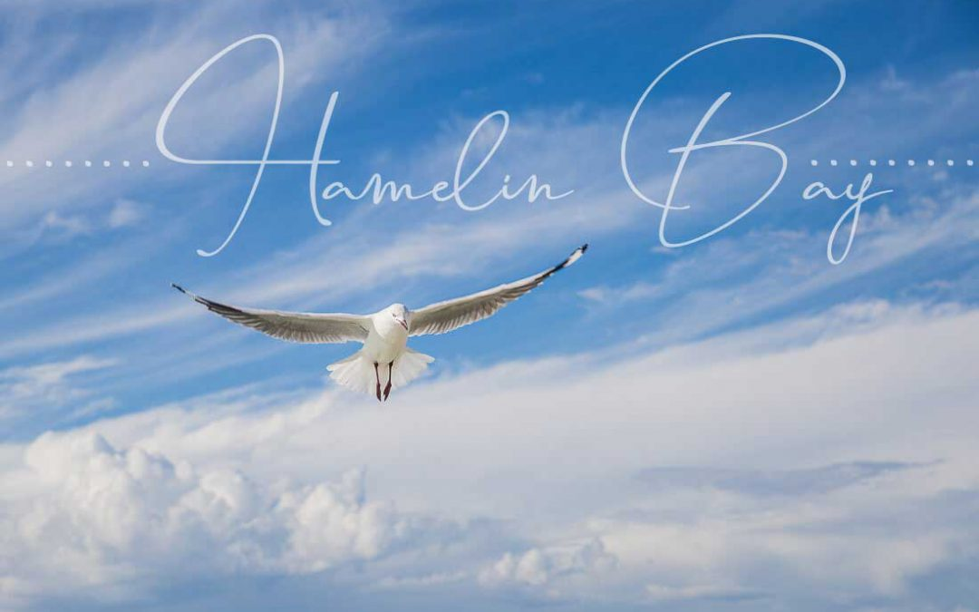 """Meer"" sehn´am Hamelin Bay"