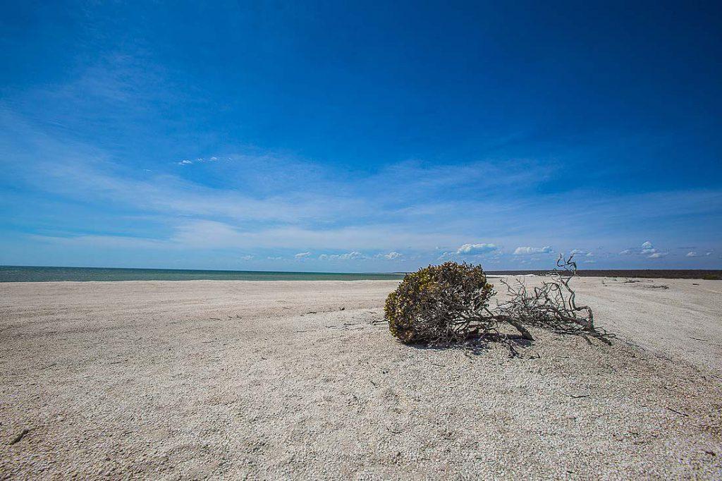 Baum am Shell Beach Australien