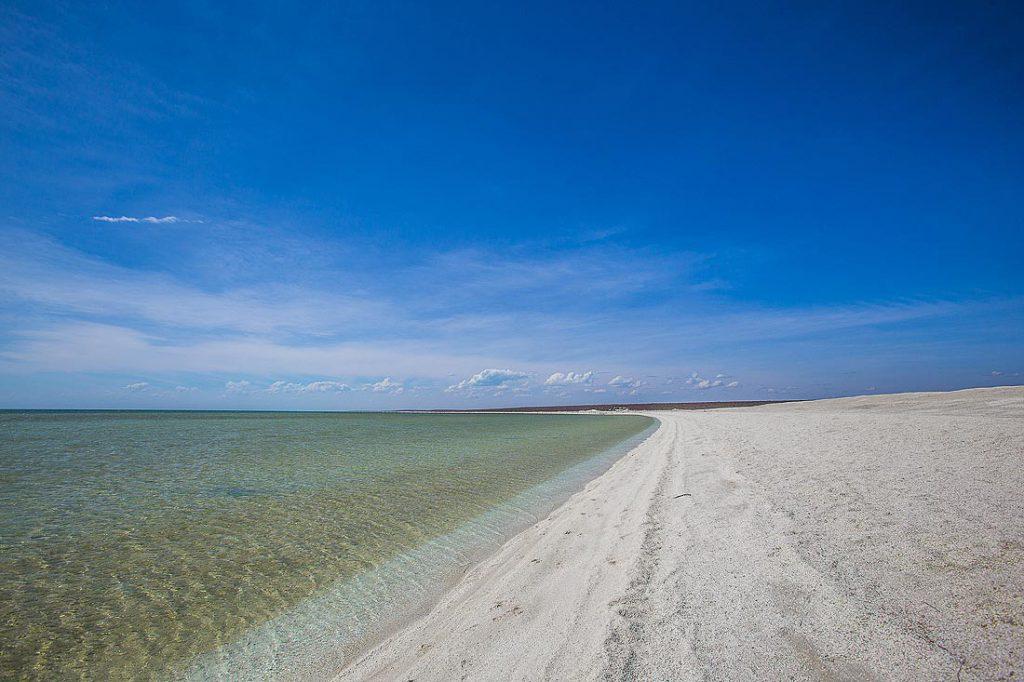 Muscheln am Shell Beach Australien