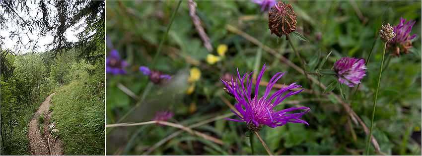Blumen Rabenkopf Gipfel